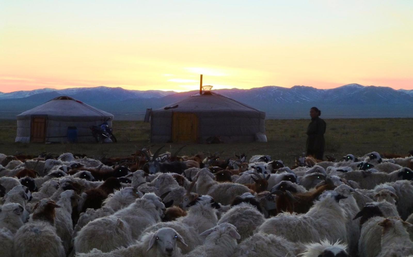 モンゴルの大草原で見た朝日
